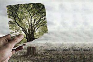 Dampak Deforestasi