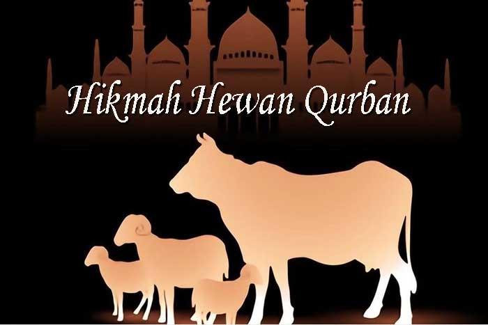 Hikmah Hewan Qurban